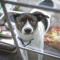 securing pet doors